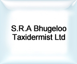 SRA Bhugeloo Taxidermist